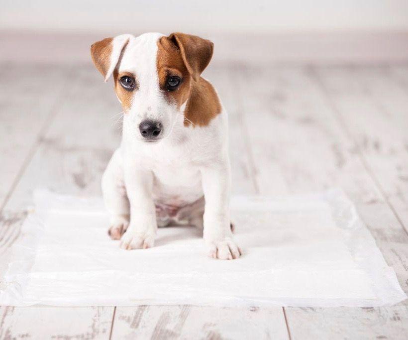 hoe-maak-ik-mijn-pup-snel-zindelijk