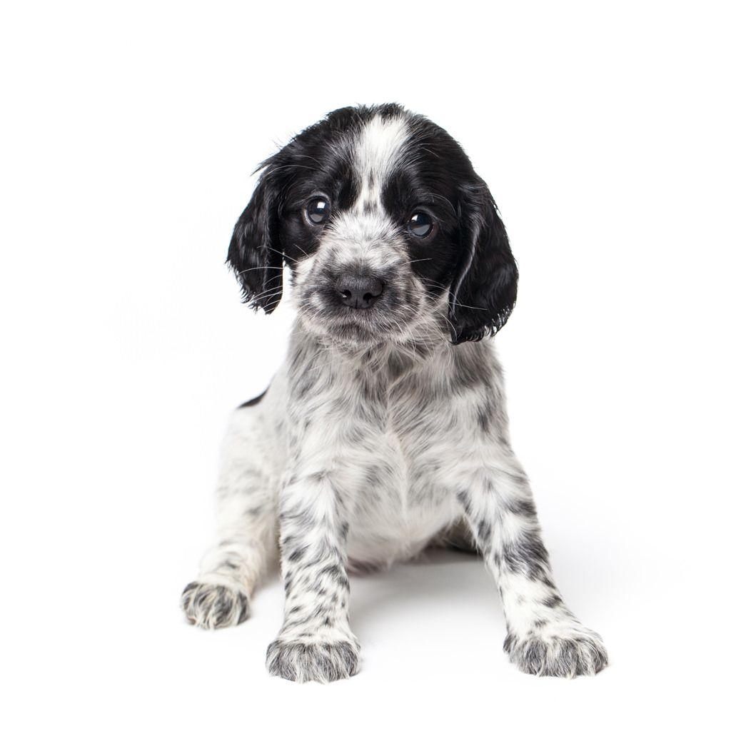 vaccinatieschema-van-je-hond