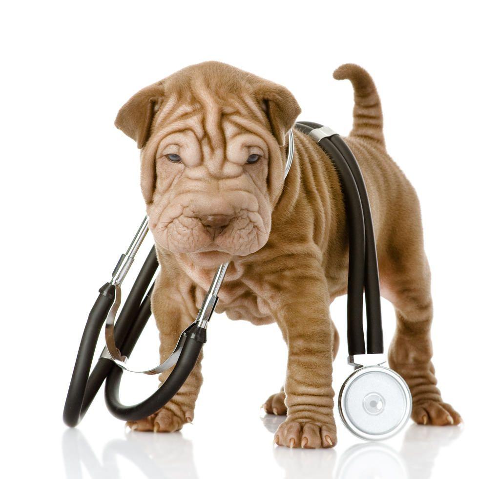 vaccin hond