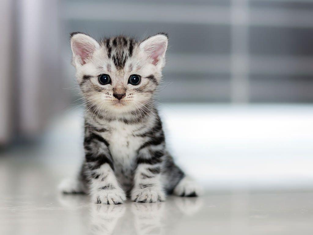 de-aanschaf-van-een-kat