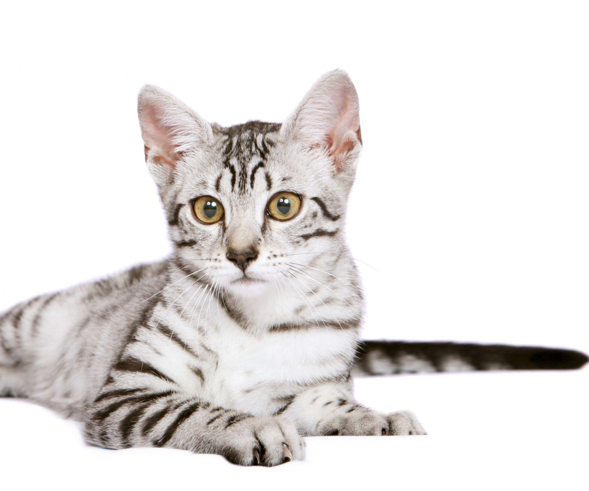 sterilisatie-kattin
