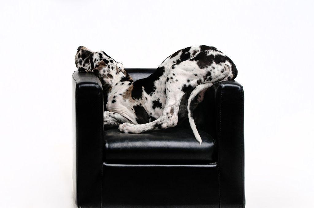 pensions voor-honden