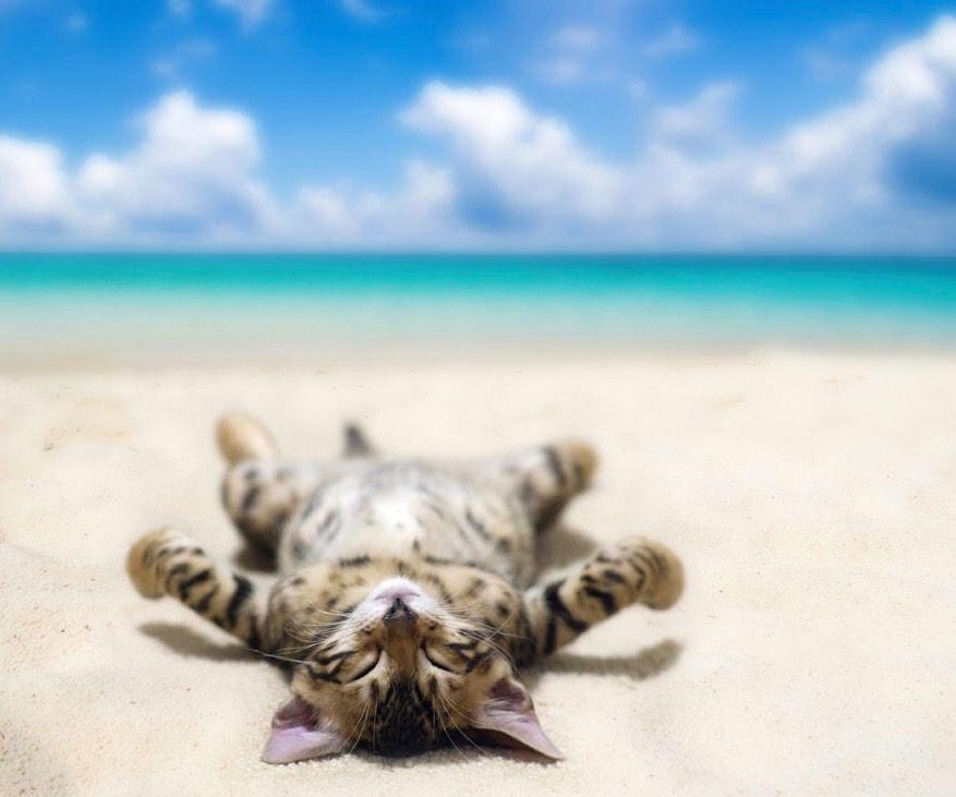 en-voyage-avec-votre-chat