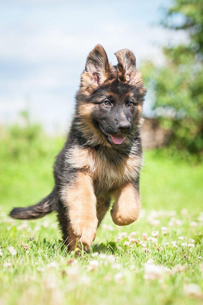 pensions-pour-chiens