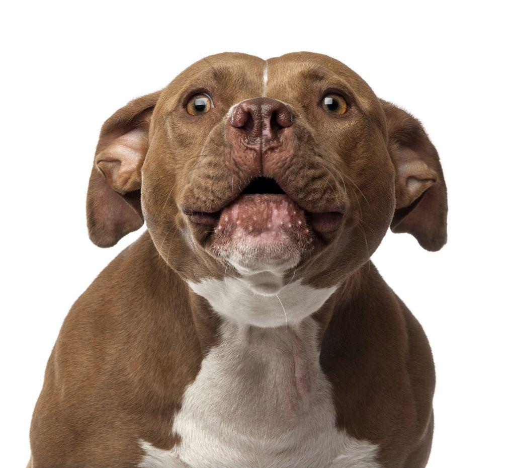 castration-du-chien