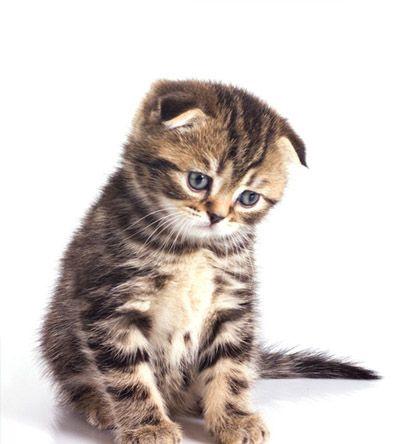 liens-interessants-chats