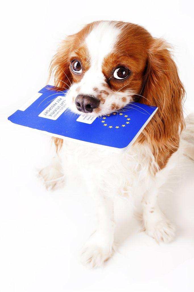 en-voyage-avec-votre-chien