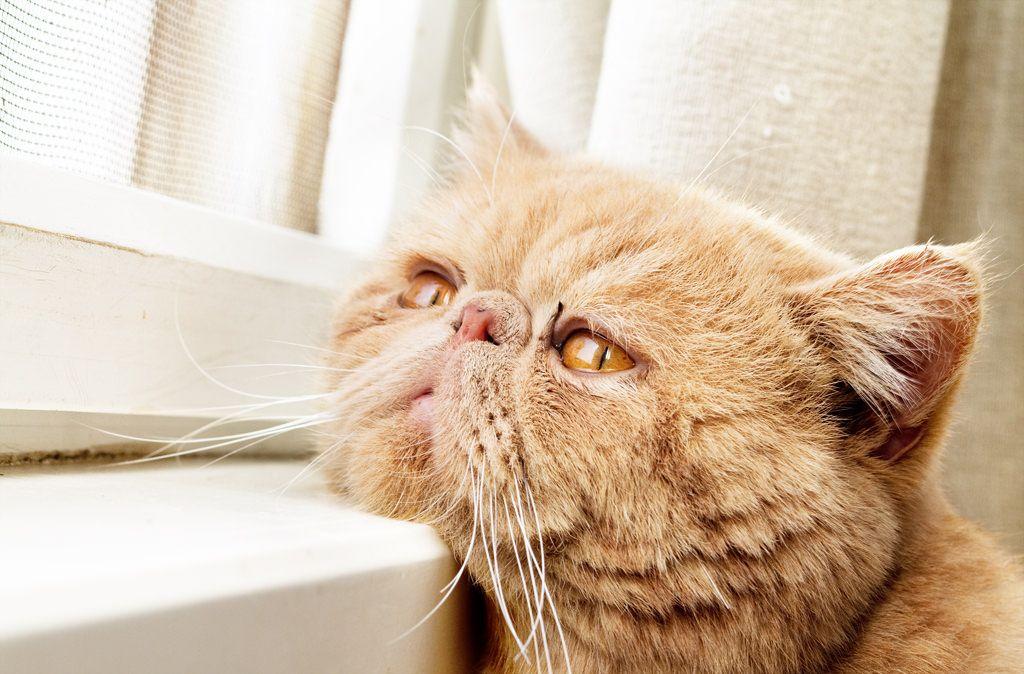 pensions-pour-chats