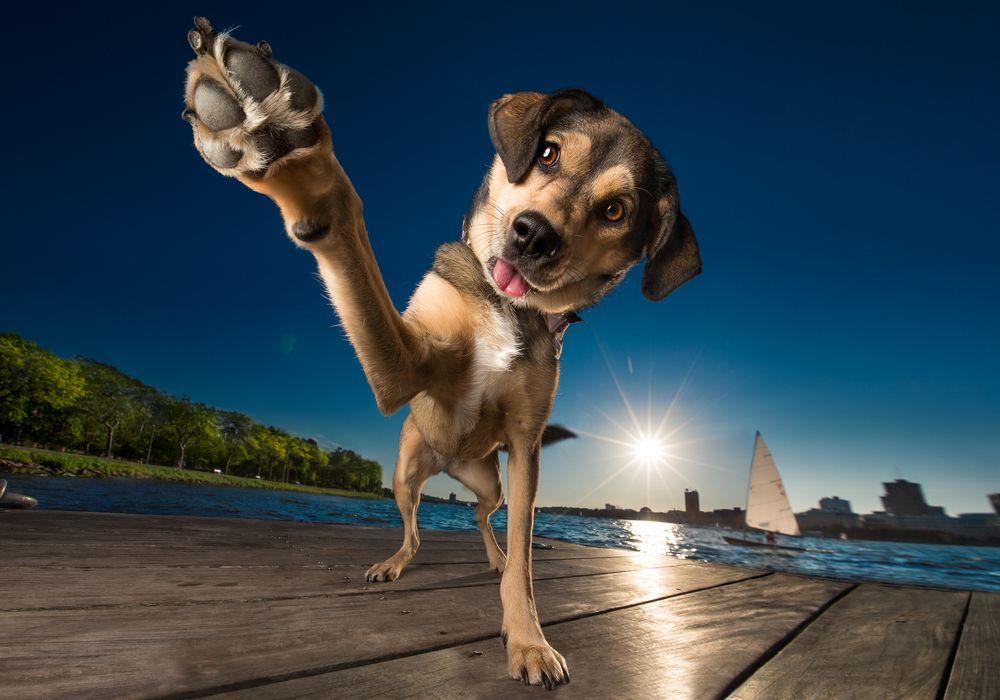 hond zon