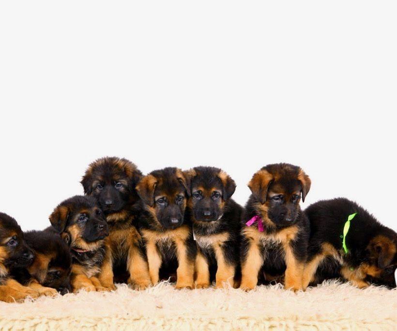 welke-pup-past-bij-mij
