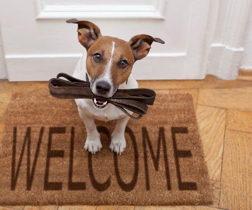 puppys-eerste-dagen-in-uw-huis
