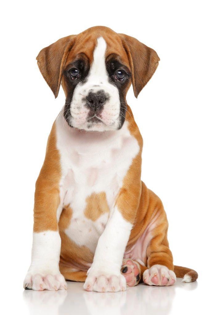 vaccin hond-3