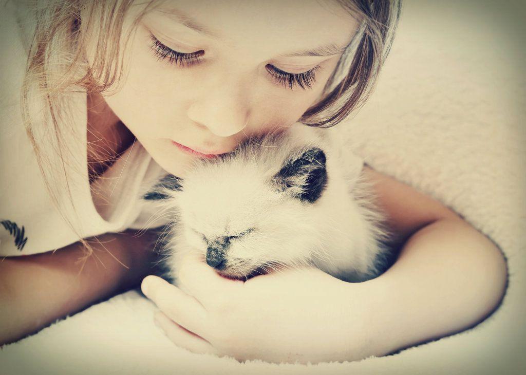 moet-u-uw-kitten-verzekeren