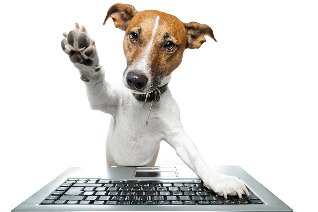 interessante-links-hond
