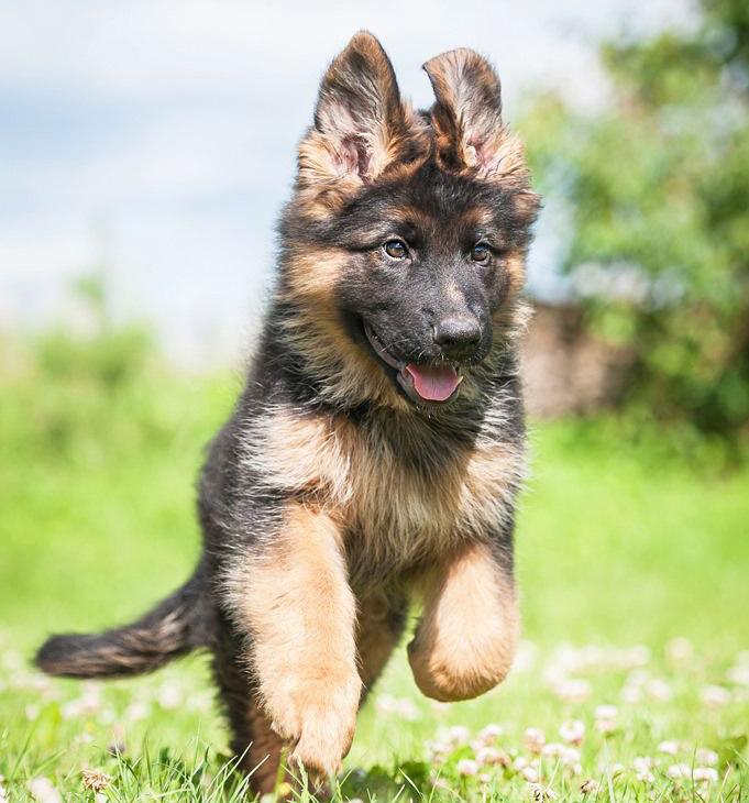 pension-voor-honden