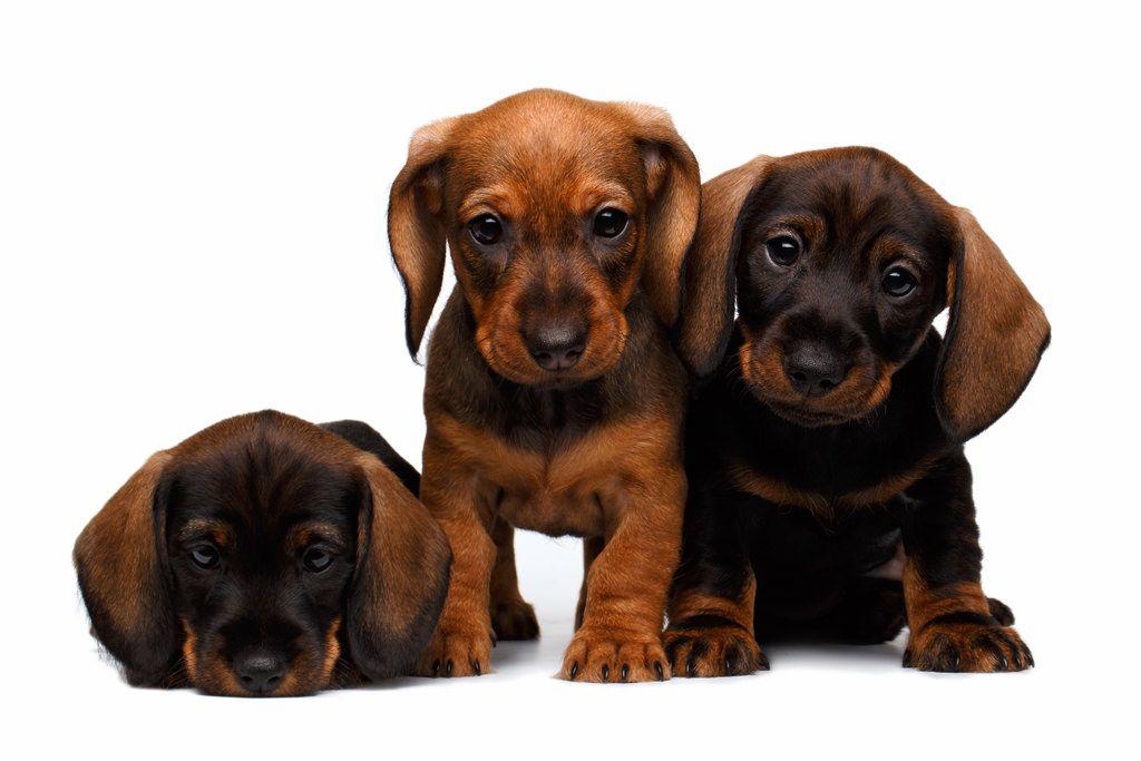 waar koop-ik-mijn-nieuwe-pup