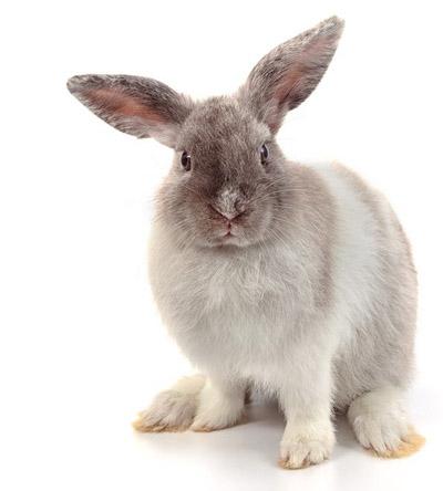 voeding-konijn