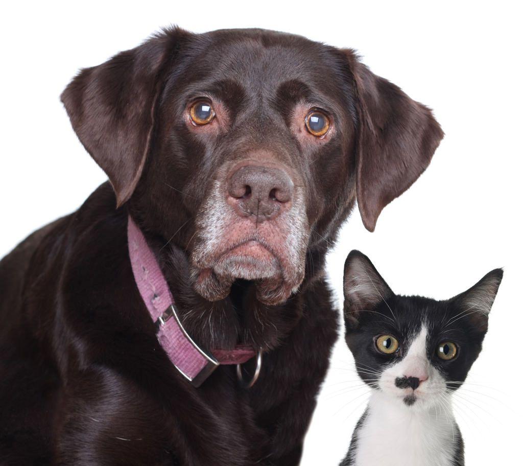 senior screening-hond-en-kat