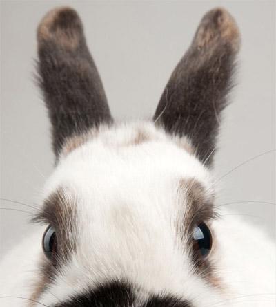 castratie-en-sterilisatie-konijn
