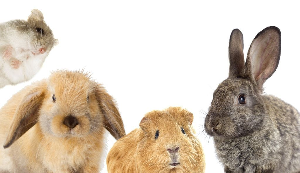 pension-voor-konijntjes