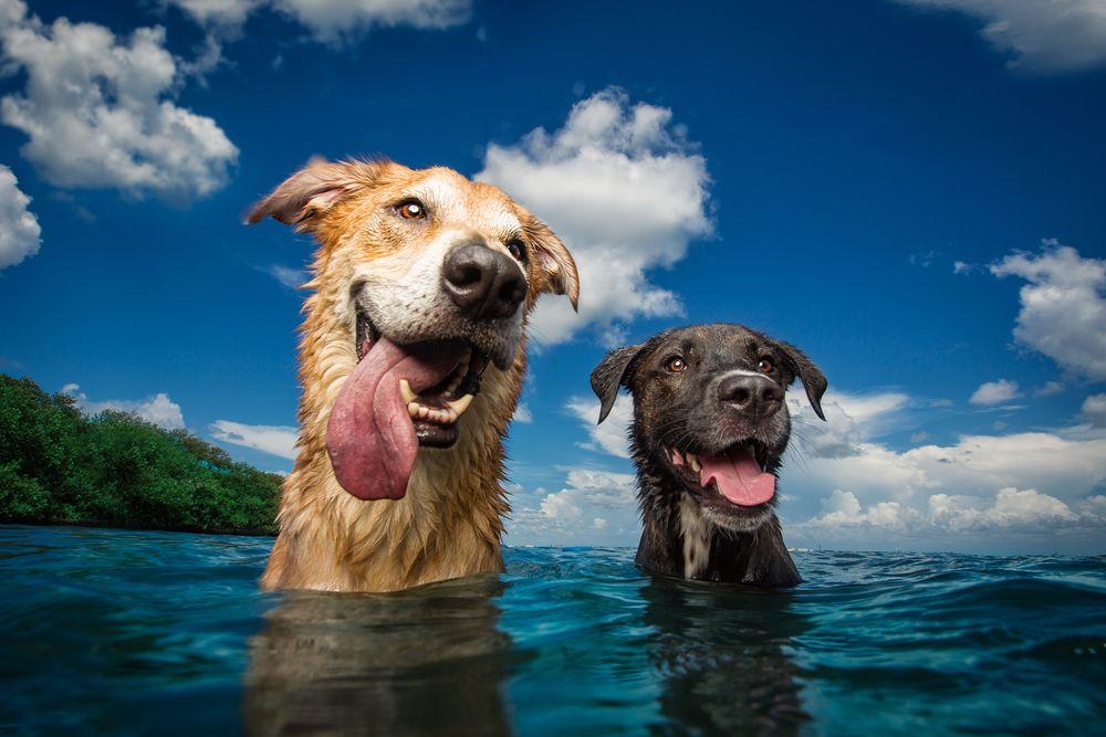 dog breath-photography